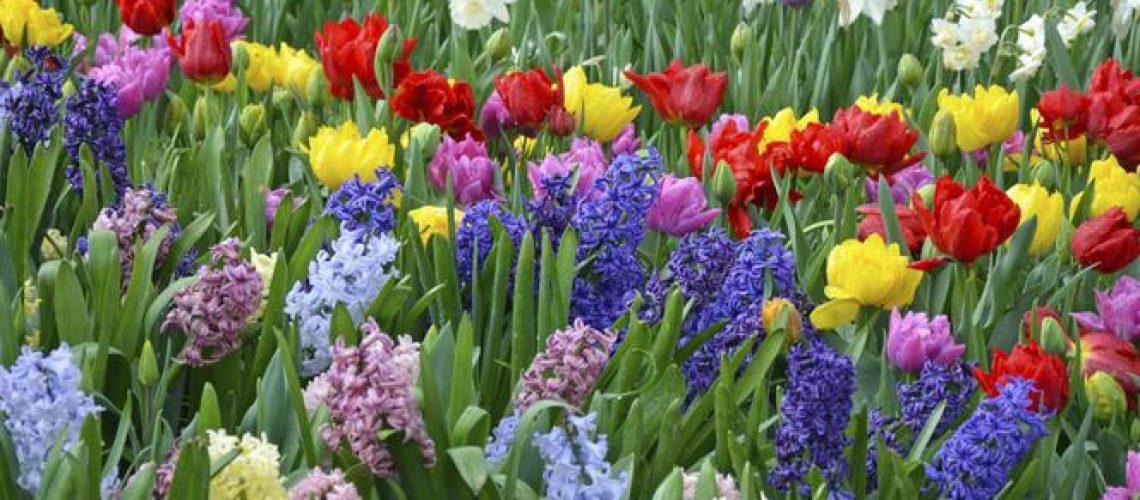 gf-niPh-M5TC-iNL2_wiosenne-kwiaty-664x442-nocrop
